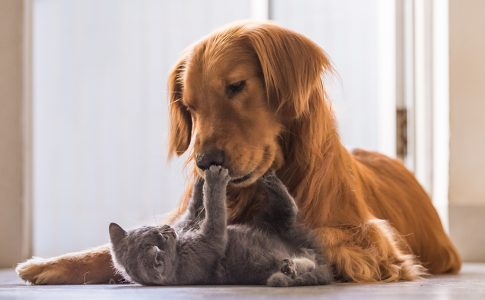 Dogs-Truly-are-Smarter-than-Cats